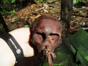 Close up of monkey skull