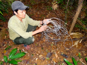 Forest Guard with snares