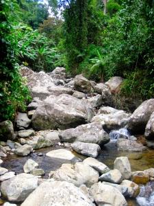 Rocky jungle stream