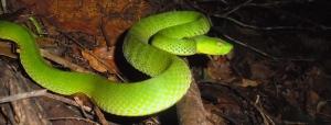 The close-call snake