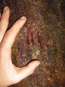 Bear claw marks on tree