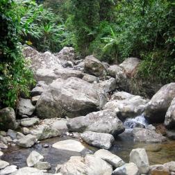 Jungle stream in Bach Ma NP