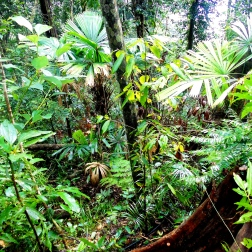 Dense jungle in Quang Nam SNR