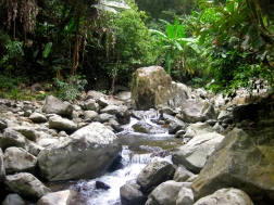 Jungle stream in Bach Ma