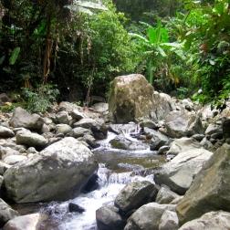 Jungle stream in Bach Ma