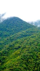 Saola jungle