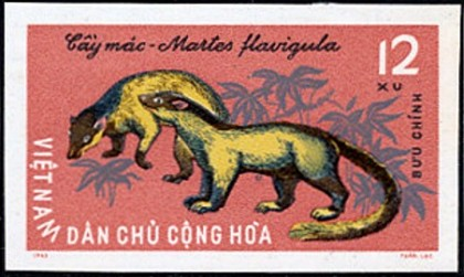 Yellow-throated martens, North Vietnam mammal stamps 1965