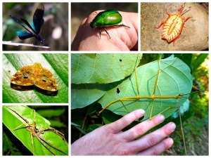 Amazing arthropods