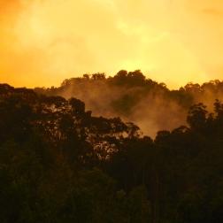 Jungle horizon