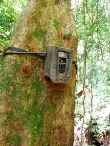One last camera trap