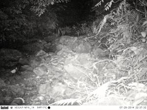 Spot the striped rabbit?
