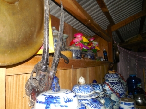 Saola skulls: notice the second one in the background