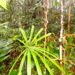 Dark jungle in the Quang Nam Saola Nature Reserve