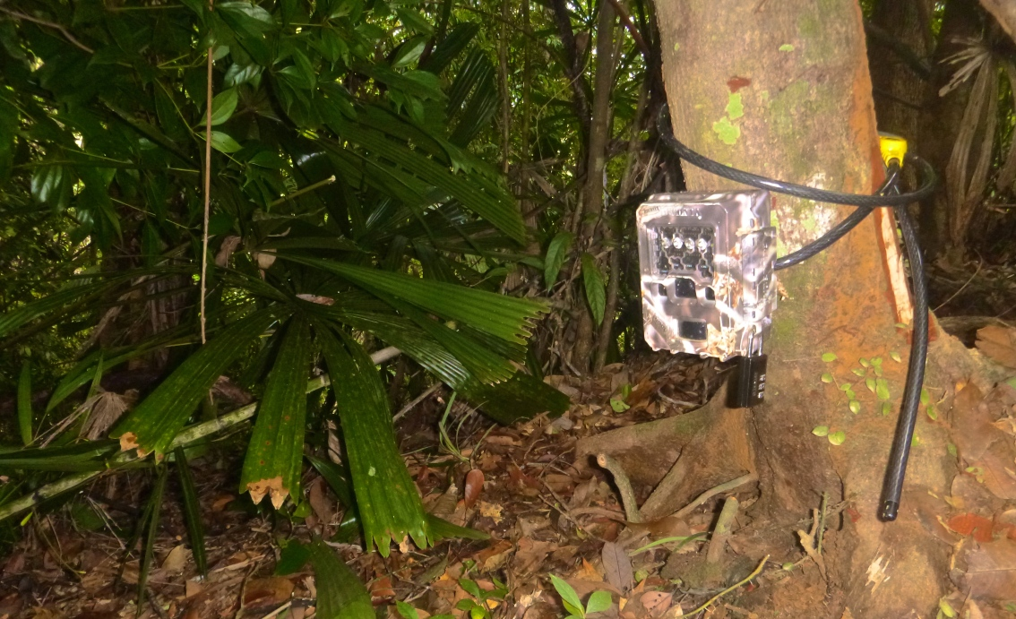 Camera trapping in Quang Nam